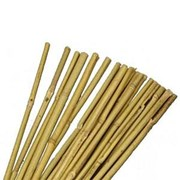 Jvl Bamboo Canes 244cm 10s (05-008)