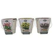 Bees Bucket Bulb Planter (120300)