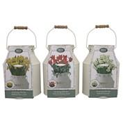 Bees Milkchurn Bulb Planter (120305)
