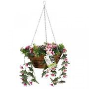 Smart Garden Easy Baskets Star Gazing Lilies (5040062)