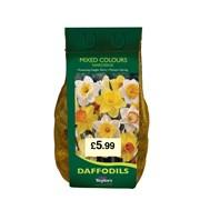 Taylors Daffodil&narcissi Mixed 2kg (DBIN60)