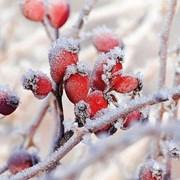 Ambiente Napkin Frozen Rosehips (33313455)