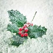 Ambiente Napkin Frozen Ilex (33313615)