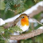 Ambiente Napkin Robin In Tree (33314685)
