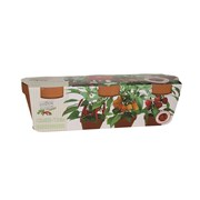 G Plants Terracotta Trio Chilli Kit (340717)
