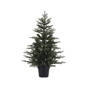 Potted Grandis Mini Tree Green 75cm (681463)