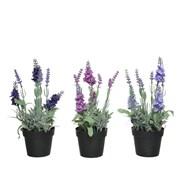 Lavender In Pot Asstd 25cm (800063)