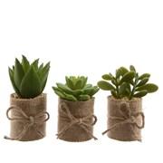Succulent Plastic 12cm (800378)
