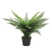 Green Fern In Pot 86cm (800781)