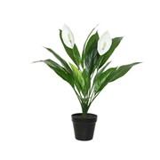Green Spathe 57cm (801115)
