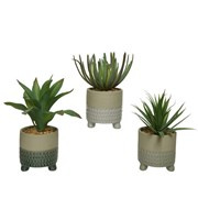 Green Succulent 20cm (801315)