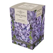 Taylors Hyacinth Glass Carafe (AH78)