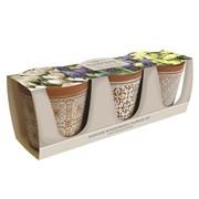 Taylors Indoor Spring Flower Trio (AP60)
