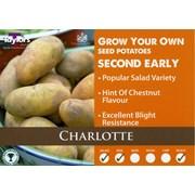 Charlotte Seed Potato 2kg (VAC440)