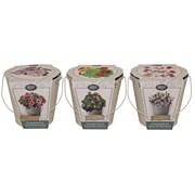 Bees Bucket Petunia (120092)