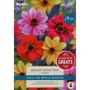 Taylors Dahlia Bishops Collection (SV300)