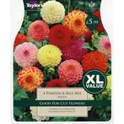 Taylors Dahlia Pompom & Ball Mix (XL540)