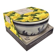 Taylors Narcissus Bowl Showcase (DP19)