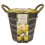 Taylors Metal Bucket Daffodils (EB154)