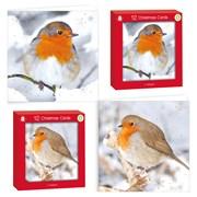 Giftmaker Sq P/graphic Robin Cards Cdu 12s (XALGC801)