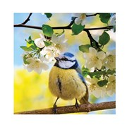 Bird In Apple Tree Card (HI0719W)