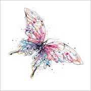 Blank Card Flutterfly (KC93001)