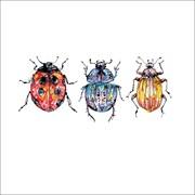 Blank Card Beetles (KC93006)