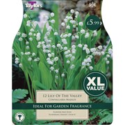 Taylors Lily Of The Valley (XL585)
