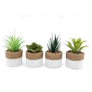 Sifcon Succulents In 2 Tone Pot 15cm (MN0014)