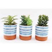 Sifcon Succulent In Ceramic Pot 17cm (MN0017)