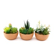 Sifcon Succulents In Pot 13.5cm (MN0044)