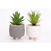Sifcon Succulent Pot With Legs 20x11 (OR1242)