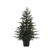 Potted Grandis Mini Tree Green 90cm (681464)