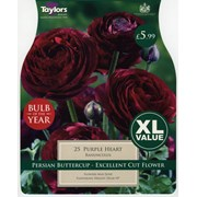 Taylors Ranunculus Purple Heart (XL786)