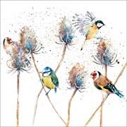 Blank Card Birds & Teasels (RT84952)