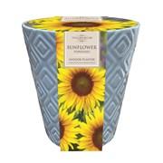 Taylors Indoor Sunflower Pot (SH28)