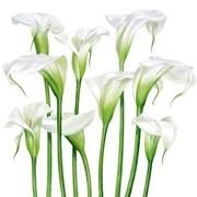 Sympathy Card White Lilies (BS77426S)