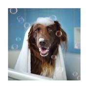 Taking A Bath Card (HI0720W)