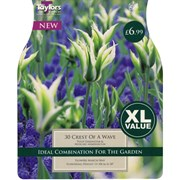 Taylors Tulip Crest Of The Wave 30s (XL116)