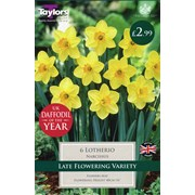 Taylors Narcissus Lotherio (XL107)