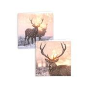 Giftmaker Square Stag Scene Cards 12s (XAKGC813)