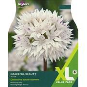 Taylors Allium Graceful Beauty x 18 (XL0083)