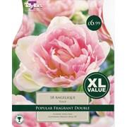 Taylors Tulip Angelique 15s (XL432)