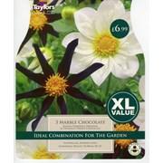 Taylors Dahlia Marble Chocolate (XL615)