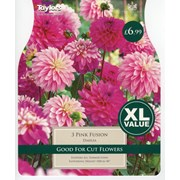 Dahlia Pink Fusion (XL538)
