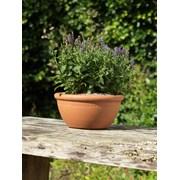 Y.f.pots Bulb Bowl Small (53342)