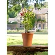 Y.f.pots Flowerpot Small (53347)