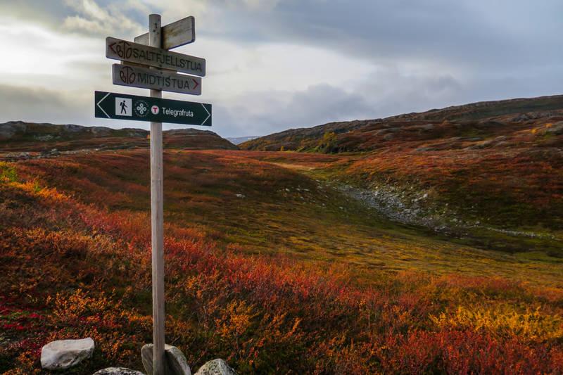 Nyt vakker natur langs Telegrafruta i Nordland.