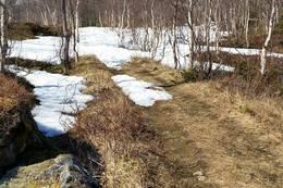 Ruta følger skogsveien til gårdene i Falkflågdalen - Foto: Rita Mevik