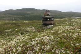 Utsikt mot vest fra Kisteåsnatten -  Foto: Britt Helene Fossøy